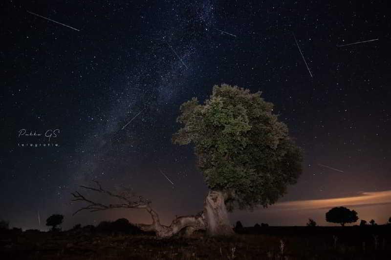 İlginç Ağaç ve Meteorları